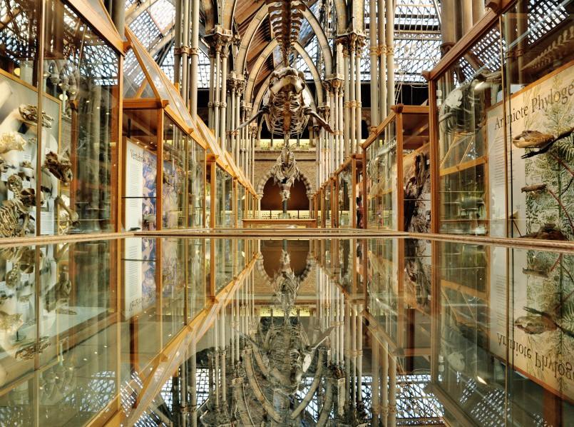 *Noemi Dreksler_HT12Wk3_Oxford Natural History Museum